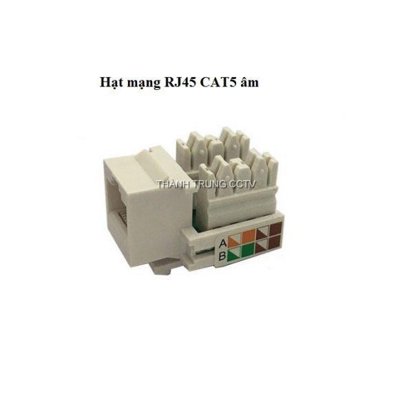 Hạt mạng âm tường Cat5